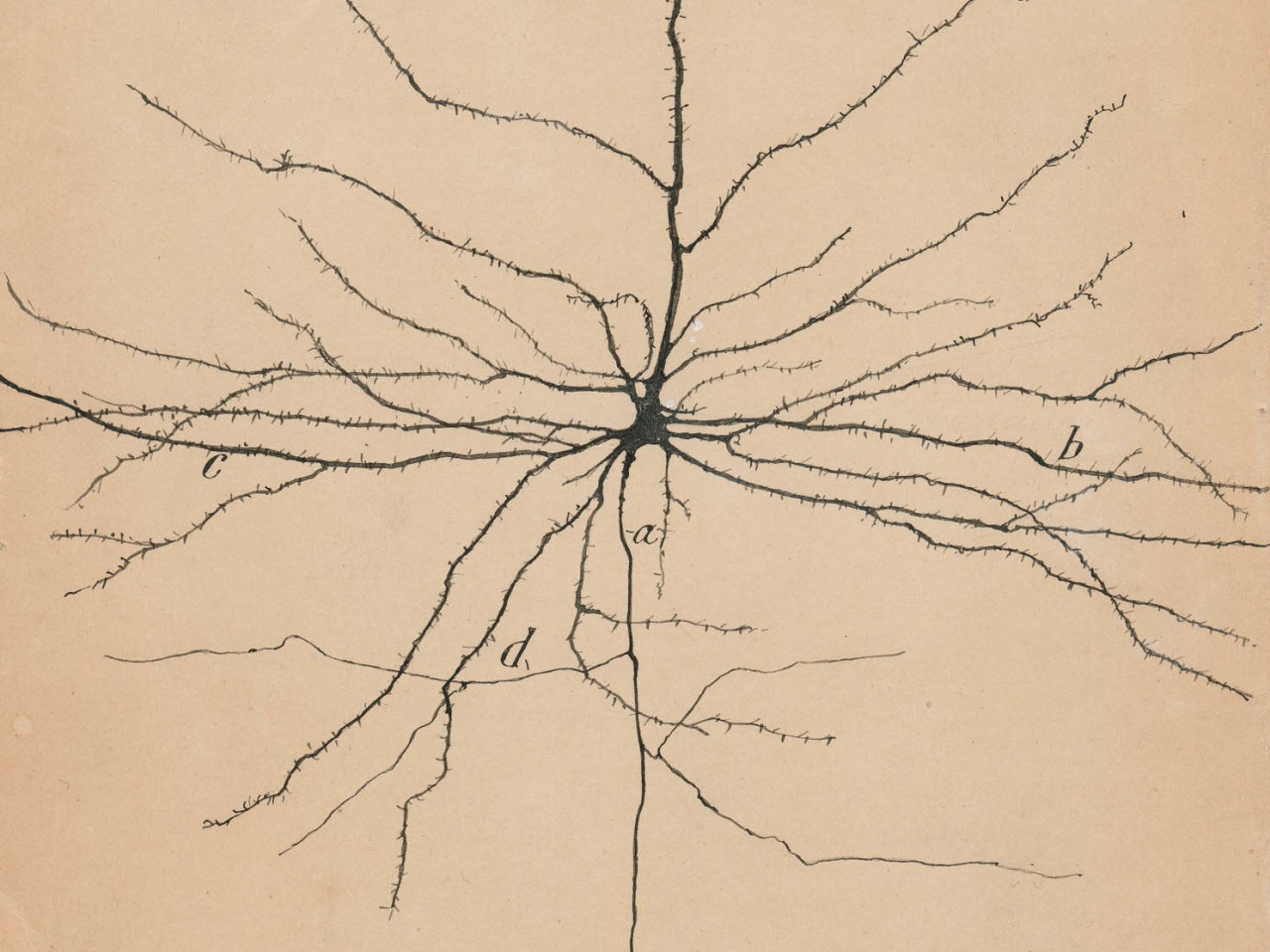 NPR: Art Exhibition Celebrates Drawings By The Founder Of Modern Neuroscience